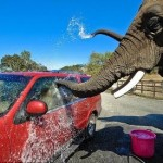 <b>Starting a car wash business</b>